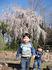 熊本城監物台植物園の桜